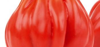 pomodori cuor di bue